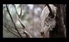Deer Skull - 2 - Stamp by Starrtoon