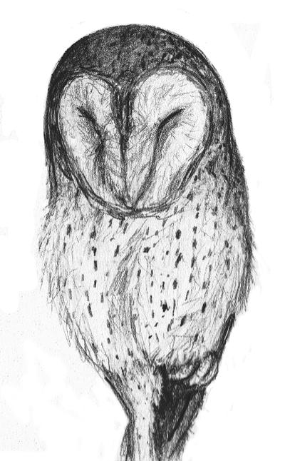 sleeping barn owl sketch by earldense on deviantart