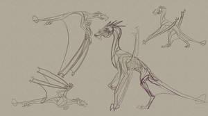 Ash Dragon Anatomy Sketches