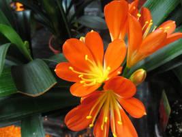 Orange Beauty Flower by JassysART