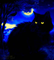Black Cat by JassysART