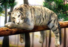 Chilling Tiger In The Woods by JassysART