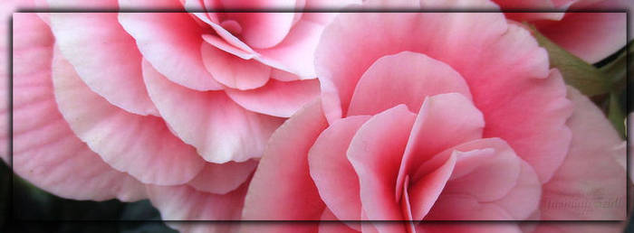 Facebook Cover 005 by JassysART