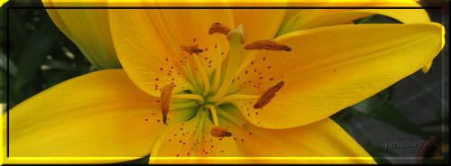 Facebook Cover 008 by JassysART