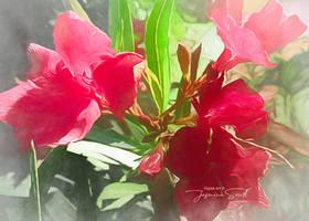 Pink Oleander by JassysART