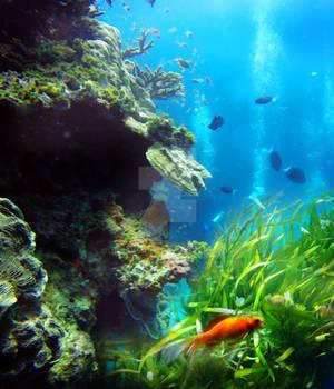 Premium Premade BG Underwater 544