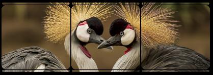 Birds Divider Deco 008 by JassysART