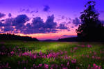 Premade Background Nature Stock 091