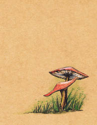 Mushrooms by rod-roesler