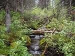 Quite Creek