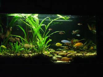 aquarium by yutta
