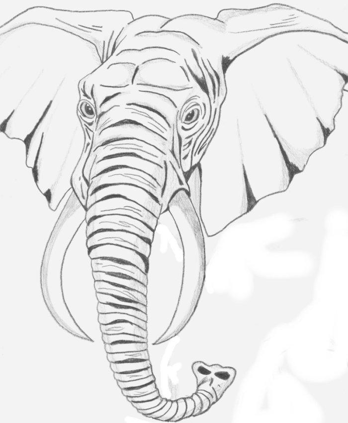 Line Art Information : Elephant head line drawing
