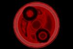 bayonetta logo circle basic