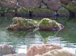 moss on rock island