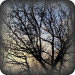 Tree Doodle II
