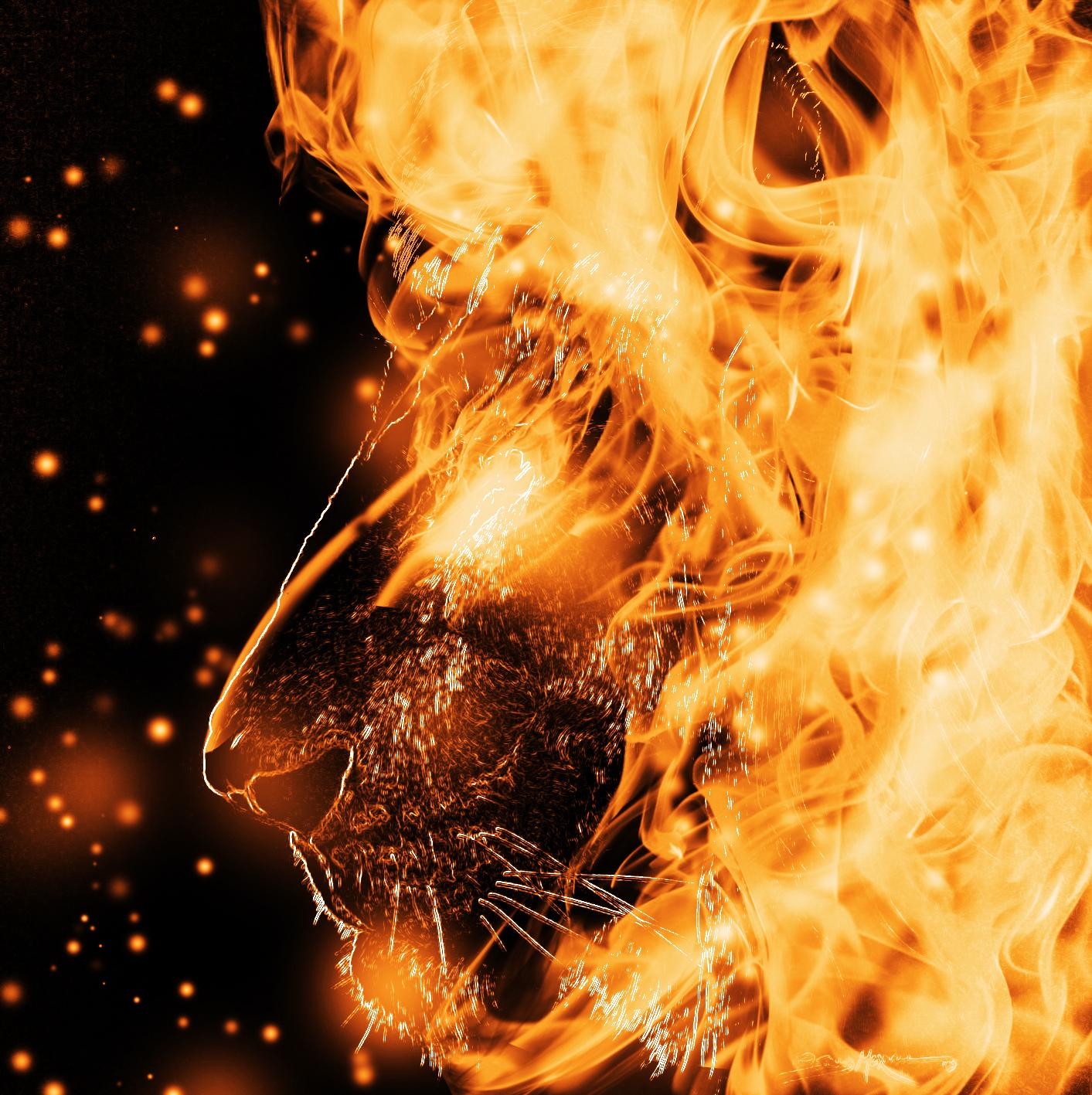 fire lion by Capitan-Mark-Antony