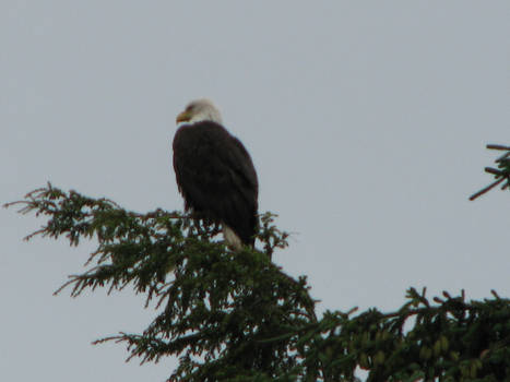 Freedom -Alaska 07-