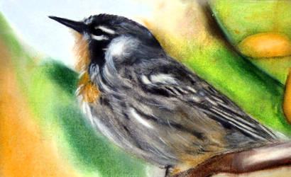Little Bird by masaad