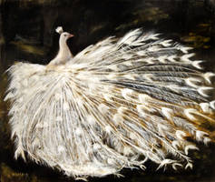 White Peacock - Oil Painting