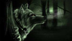 Shiwolf by jet3270
