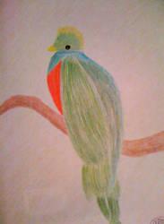 Resplendent Quetzal by Alohasoy