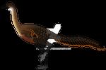Halszkaraptor escuilliei (Male) (updated)