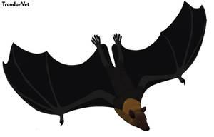 Indonesian Fauna: Pteropus vampyrus