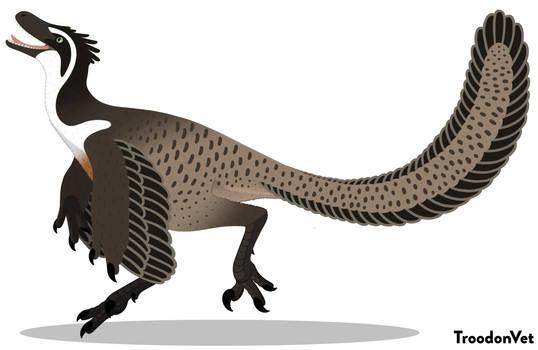 Paleo Drawing: Velociraptor osmolskae