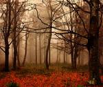 autumn by pauljavor
