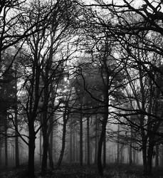 crazy forest by pauljavor
