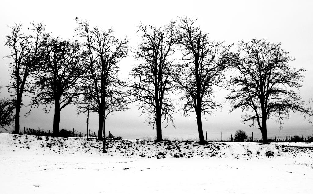 winter by pauljavor