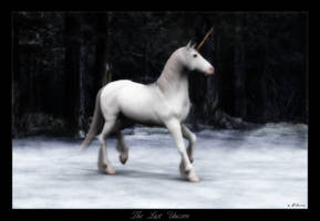 The Last Unicorn by solitaryart