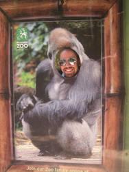 Monkey by a50