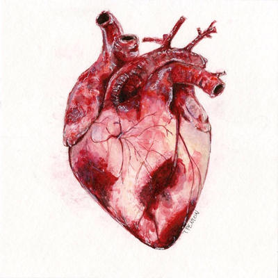 Watercolor Human Heart by taylorpentonart on DeviantArt