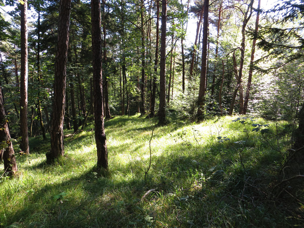 forest 4 by LeikyaStock