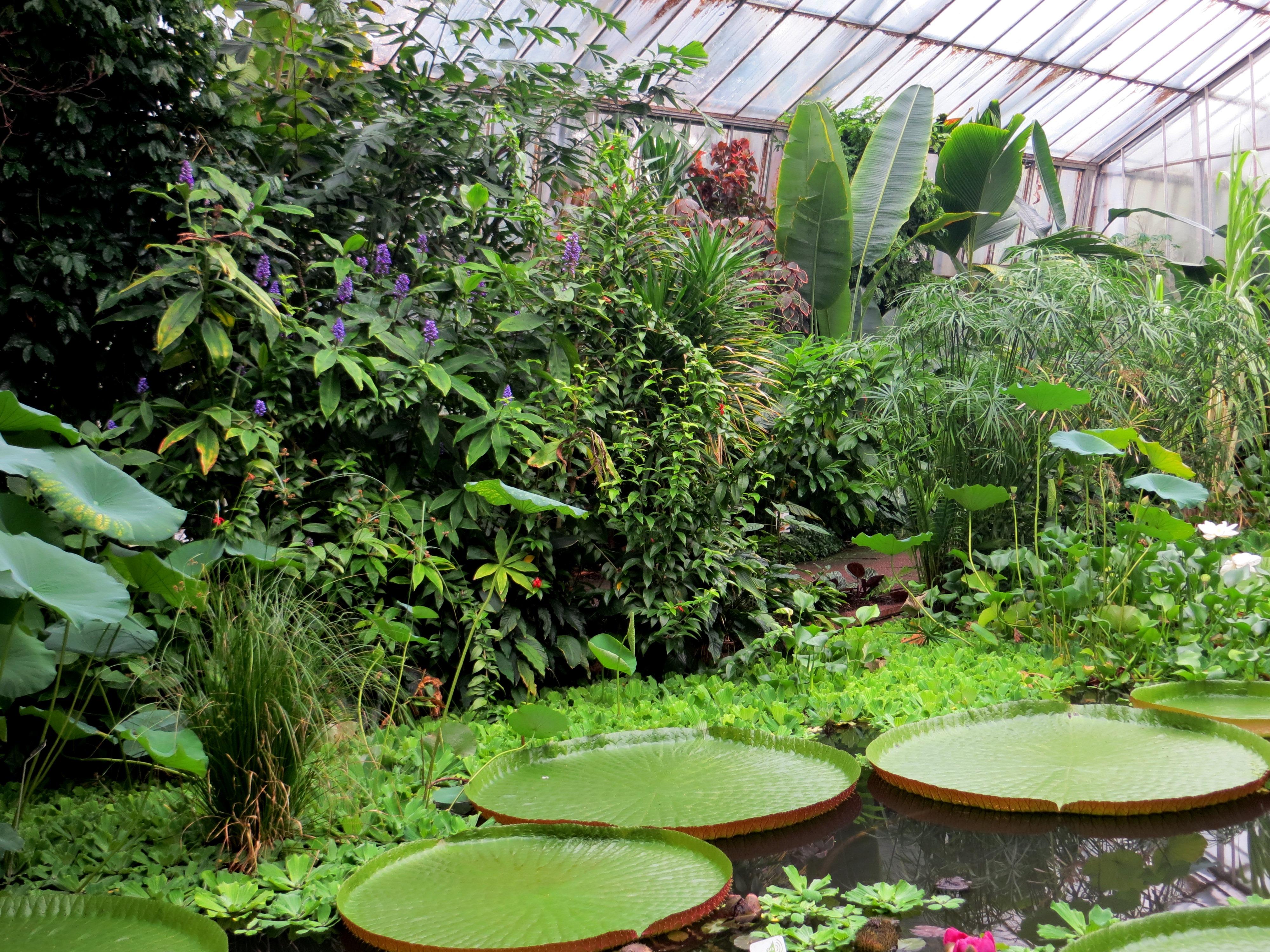 Botanic Garden 24 by LeikyaStock