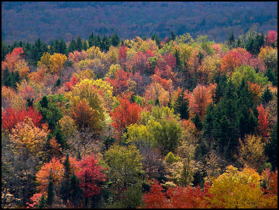 Fall in Vermont by professor-pi