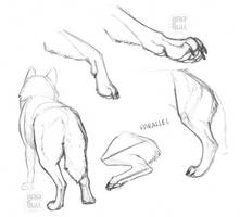 Wolf Study - Legs + Paws