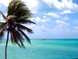 Florida by designing-Life