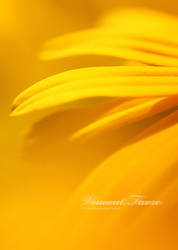 Yellow by vincentfavre