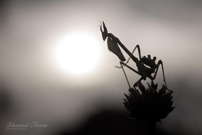 Alien ? by vincentfavre