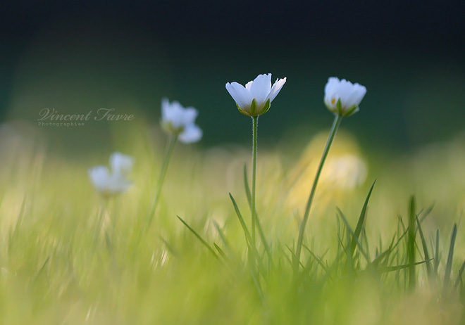 CRI-CRI-CRISTALY LESSONS Spring_feeling____by_vincentfavre