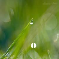 Spark... by vincentfavre