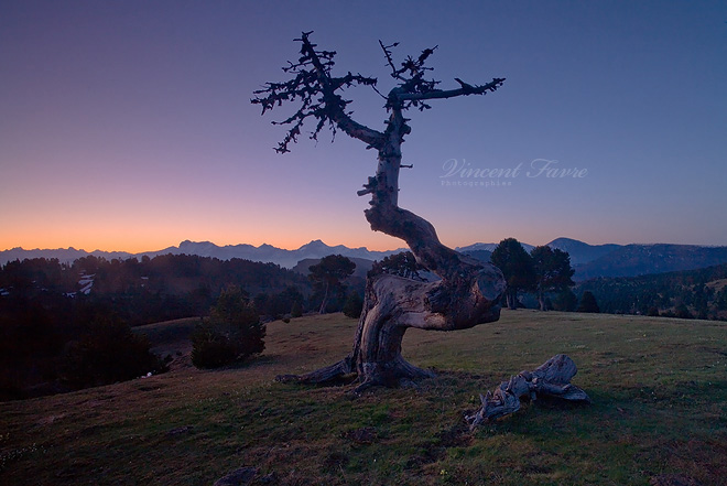 The dead tree... by vincentfavre