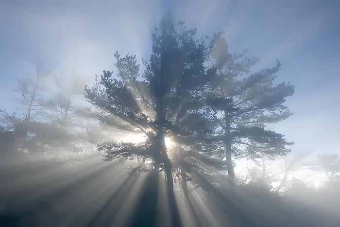 Fendant la brume... by vincentfavre