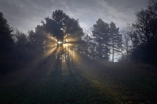 Golden rays...
