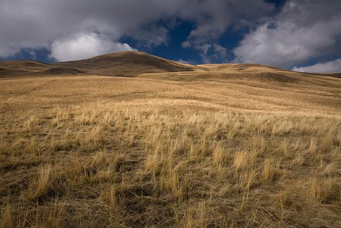 Burnt grass... by vincentfavre