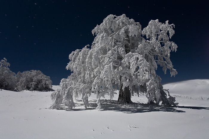 Arbre de Noel by vincentfavre