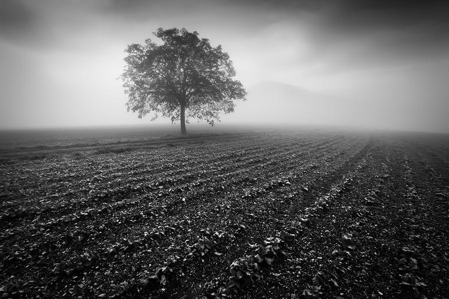 Les brumes en octobre... by vincentfavre