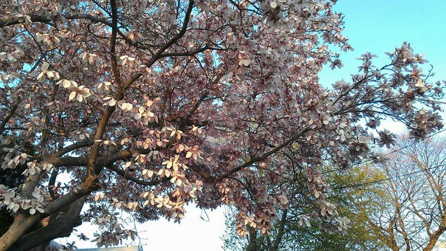 Beautiful Tree by MHuang51491